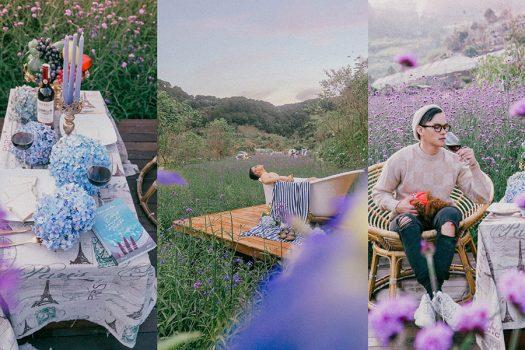 F Cánh Đồng Hoa Đà Lạt mê mẩn đắm say sắc tím của hoa Herba