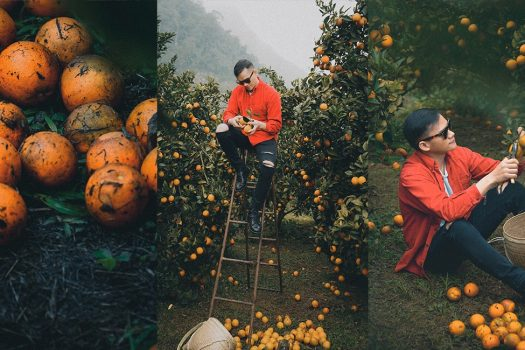 Vườn cam Mộc Châu – Tọa độ check in đẹp 'ngàn like'